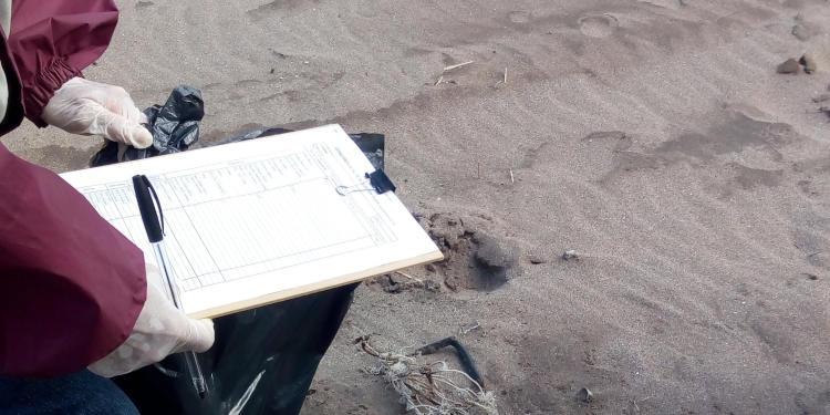 Censo basura en la playa sauce grande