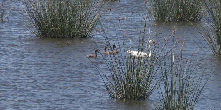 Laguna sauce grande avistajes