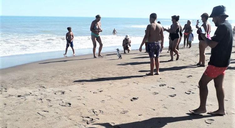 Aparición de Pingüinos en la playa de Monte Hermoso recomendaciones