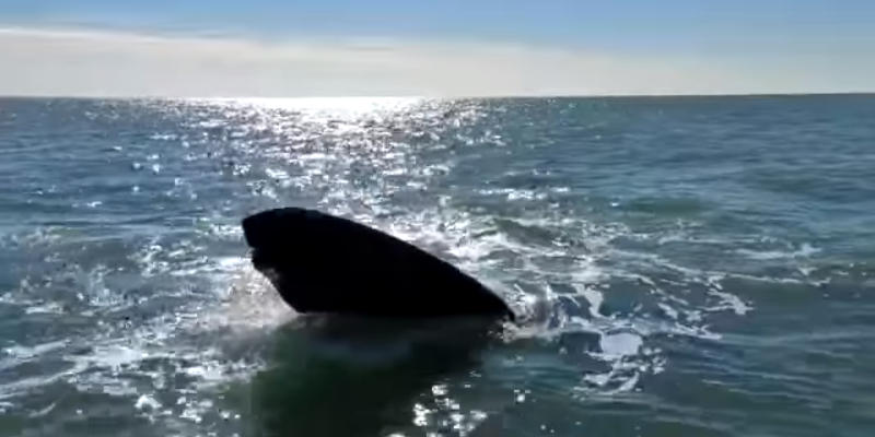 Orcas en Monte Hermoso